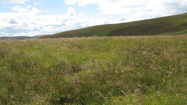 Grasses_on_Glengaber_Hill
