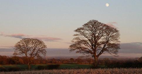 November_trees_at_dusk